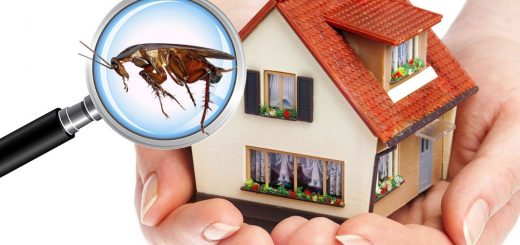 Pest control in Commercial Areas